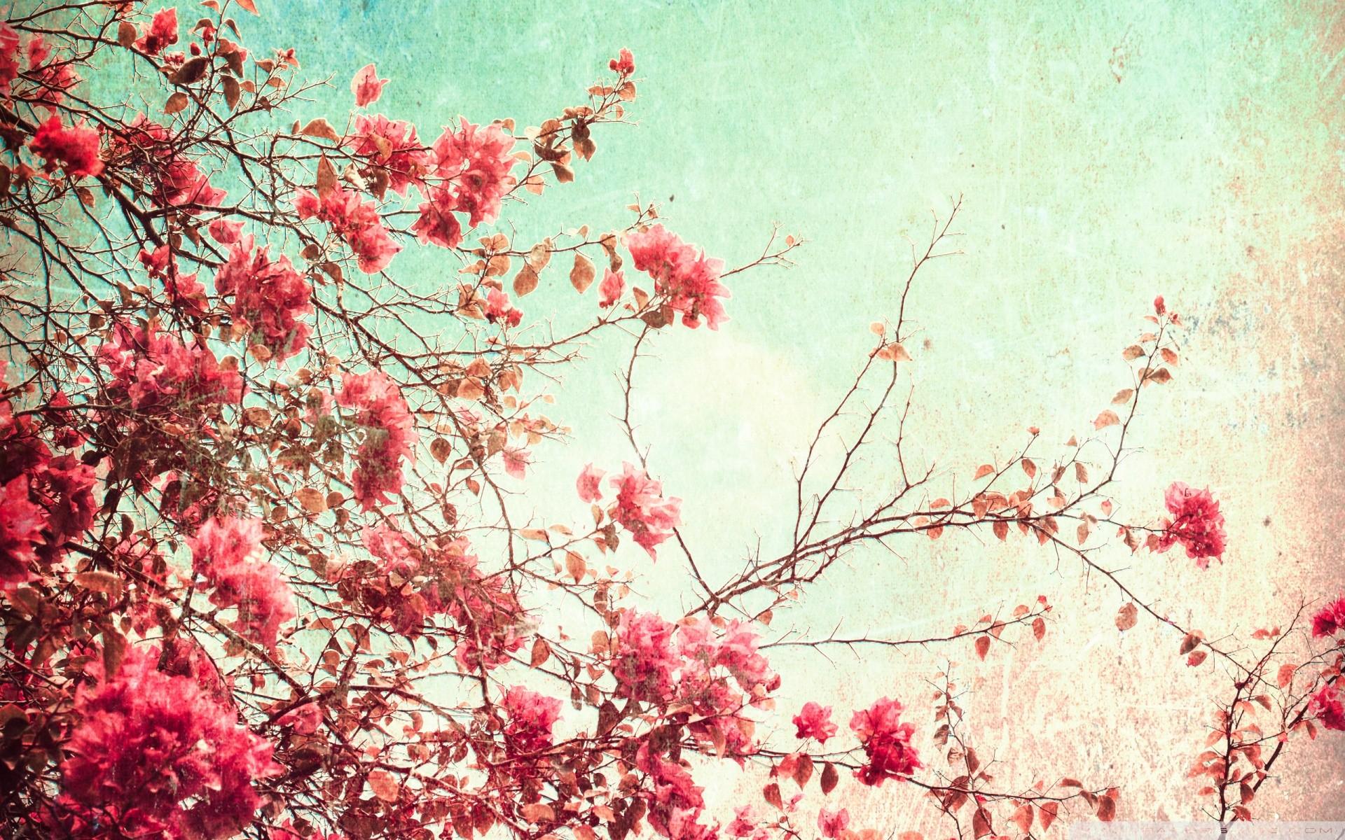 Bahar rüyaları