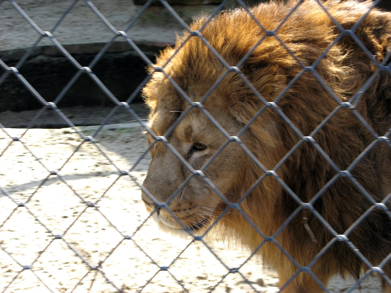 Bakı Zooparkı bağlanır? - Direktordan açıqlama